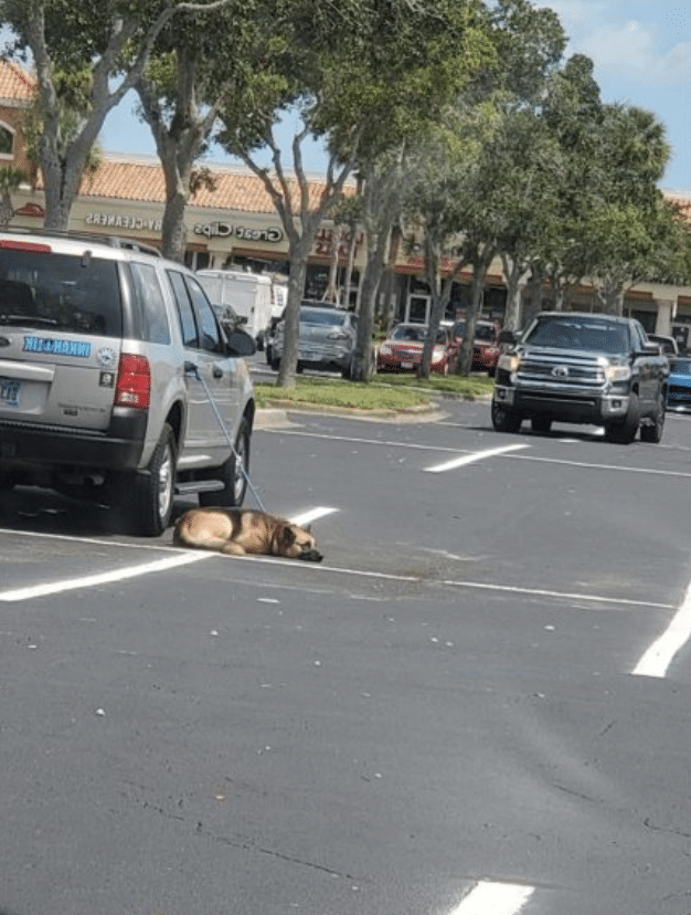 police decline to help dog left tethered to owner's car