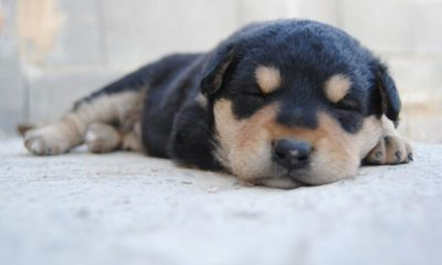 vets and shelters see drastic rise in deadly parvo cases
